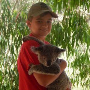 SG_koala