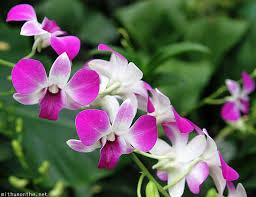 SP flower