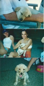 Tinka as a puppy in 2000!